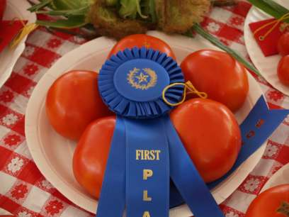 Award winning tomatoes at Tyler Texas Farmers Market