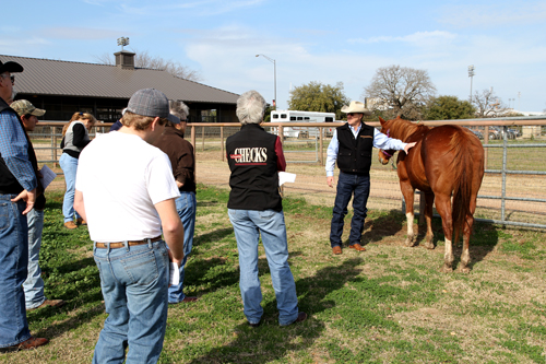 Texas A&M AgriLife Extension Equine Specialist