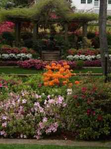Deciduous and evergreen azaleas are perfect landscape plants for east Texas gardens, and the Pyron's open garden during Tyler's Azalea Trail is a great example.
