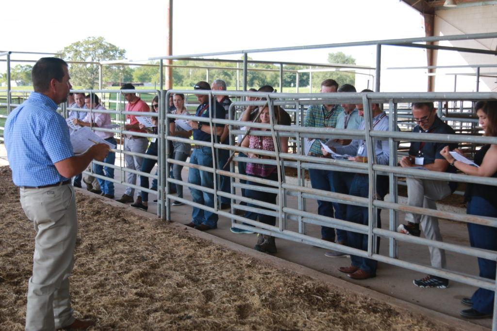Dr. Jason Cleere assisted participants in evaluating both beef steers and cows.