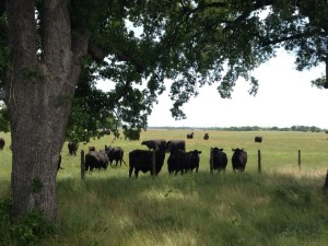 grazing lease 2