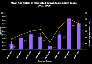 This graph shows the relationship between rainfall and adult-to-juvenile ratios of bobwhite quail in south Texas. The data represented suggests that rainfall can be an indicator of bobwhite quail production in south Texas. For additional background on this data, consult Tri et al. (2013) within the Journal of Wildlife Management Volume 77, Issue 3, pages 579-586.)